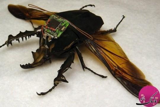 DARPA's Cyber Bug Project حشرات جاسوسی دارپا