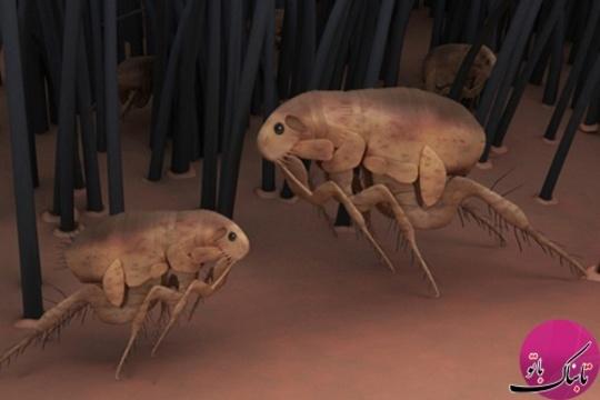 حشرات ابزار انتقال بیماری