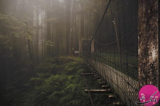 پل جنگل ـ تایوان