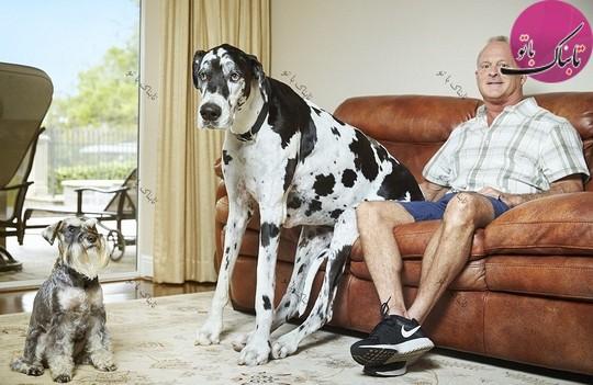 بزرگترین سگ دنیا.