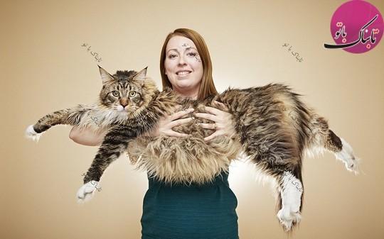 بزرگترین گربه دنیا.