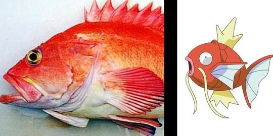 صخره ماهی زرد