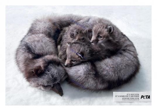آن ها « خز » نیستند، پوستری برای جلوگیری از شکار حیوانات