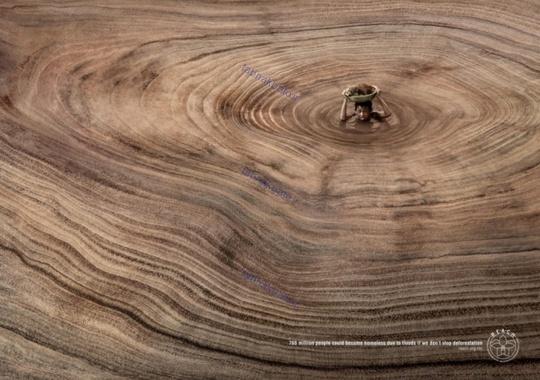 خطر قطع درختان جنگل