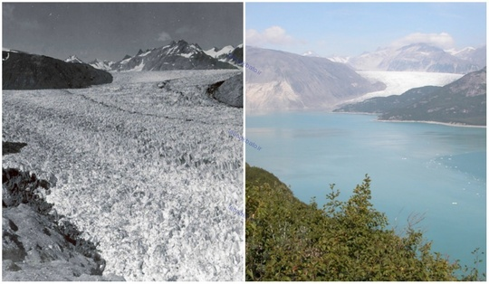 یخچال میور، آلاسکا، اوت ۱۹۴۱ و آگوست ۲۰۰۴ میلادی