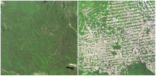 جنگل های روندوینا، برزیل، ژوئن ١٩٧٥، اوت ۲۰۰۹ میلادی