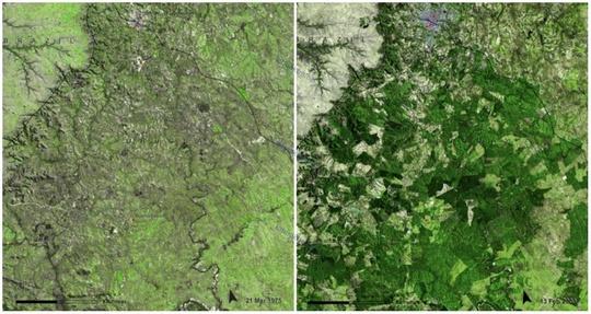 جنگل اوروگوئه، مارس ١٩٧٥ و فوريه ٢٠٠٩ ميلادی، دولت اروگوئه قصد دارد تا جنگل های این منطقه را از ۴۵۰۰۰ هکتار به ۹۰۰ هزار هکتار برساند، هر چند که ممکن است تنوع گیاهی و حیوانی در این منطقه دستخوش تغییر شود.