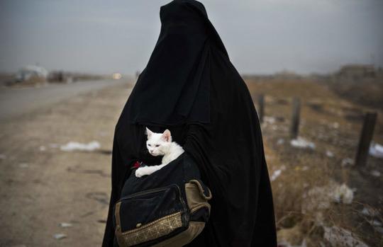 زن محجبهای با گربهاش در هنگام فرار از موصل