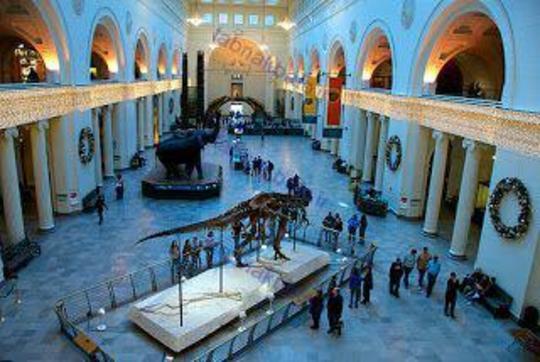 موزه تاریخ طبیعی فیلد، شیکاگو