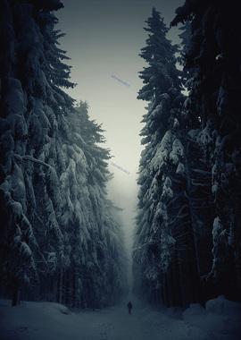 تصاوير زیبا و نفس گیر از مناظر زمستانی