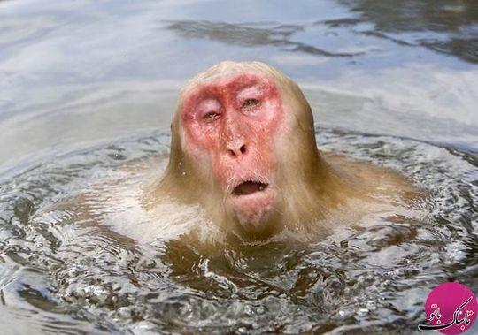 تصاویری جالب از آب شدن حیوانات!