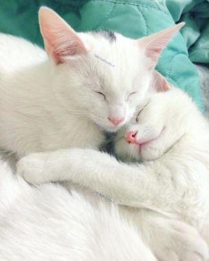 بامزه ترین گربه های دوقلو دنیا +تصاویر