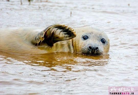 تصاویر کمدی وخنده دار از حیوانات