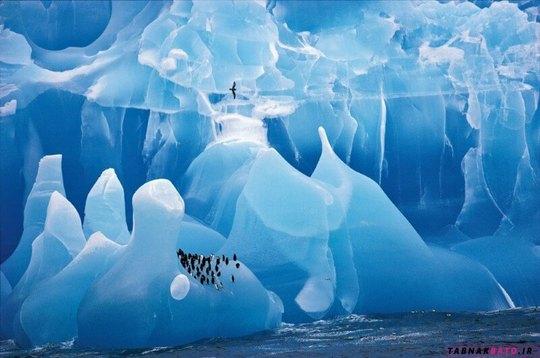 پیاده روی پنگوئن ها بر روی کوه یخی