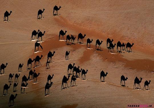 شترها را کشتی صحرا می نامند بنابراین این عکس هم شترها را بر روی امواج شن نشان می دهد