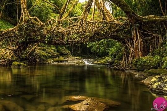 پلی ساخته شده از ریشه درختان بالای یک رودخانه، مگالایا، هند