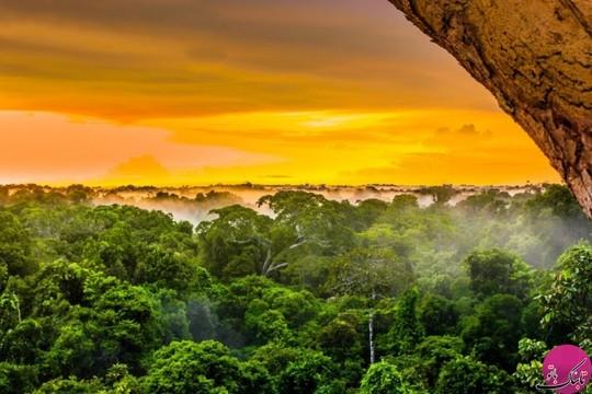 جنگل های بارانی آمازون، برزیل