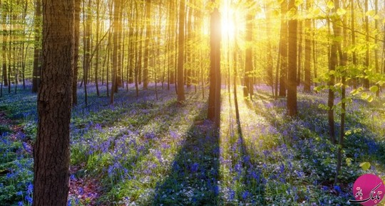 جنگل های هالربوس، بلژیک