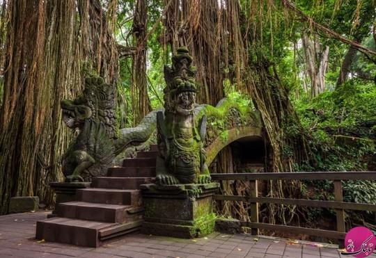 جنگل میمون ها، بالی، اندونزی