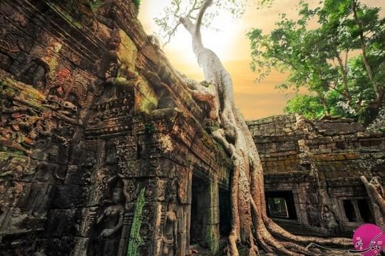 معبد انگکوروات، کامبوج که ریشه های بزرگ بانیان سراسر معبد را در برگرفته است
