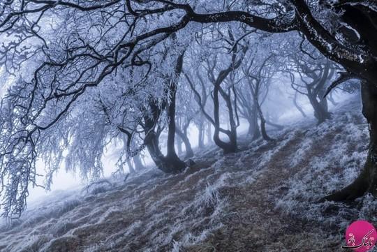 پارک جنگلی peak district، انگلستان
