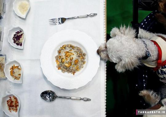 یک سگ خانگی در حال بو کشیدن غذای ارگانیک سگها در شهر توکیو ژاپن.