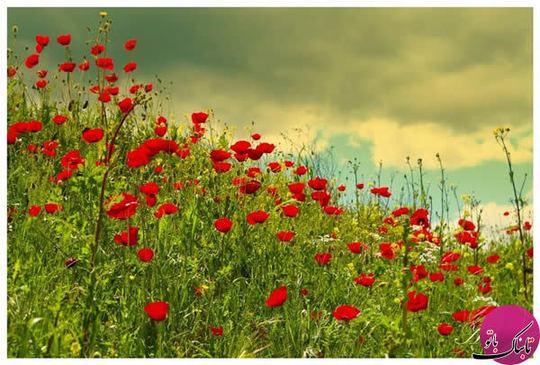 طبیعت زیبای بهاری
