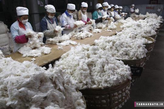 دستهبندی پنبه توسط کارگران در کارخانه نساجی در سوئینینگ استان سیچوان چین
