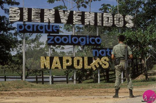 پابلو إسکوبار یک باغ وحش شخصی داشت