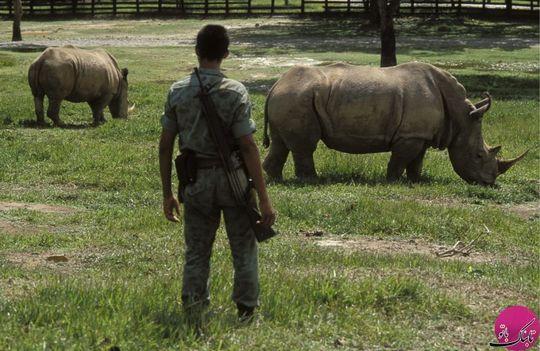 کرگدن، اسب و فیل در باغ وحش او به چشم میخورد