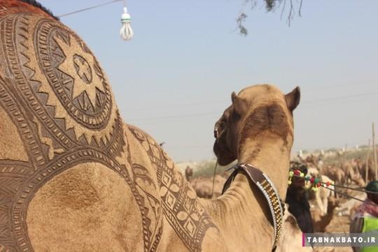 بازار فروش چها ایان در شهر کراچی پا تان از بزرگترین بازارهای مشابه است. هزاران نفر هر روز برای ید شتر که به شکل های مختلف تزیین شده به این مکان می آیند