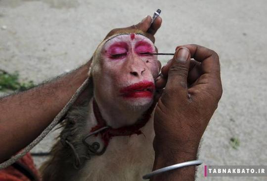 آرایش میمون برای ب درآمد