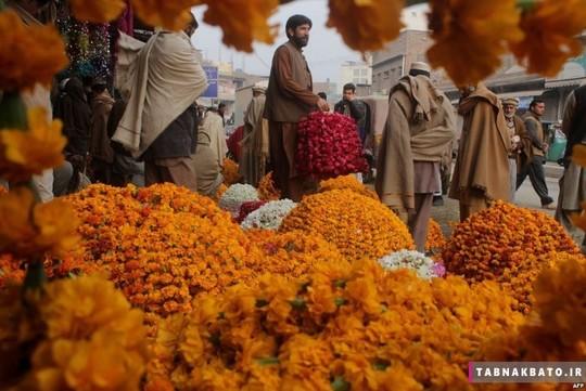 بازار گل فروش های پا تان