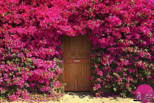 درب باغ ـ مکان؛ نامشخص