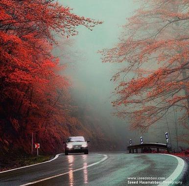 جاده جنگلى عباس آباد. غرب مازندران