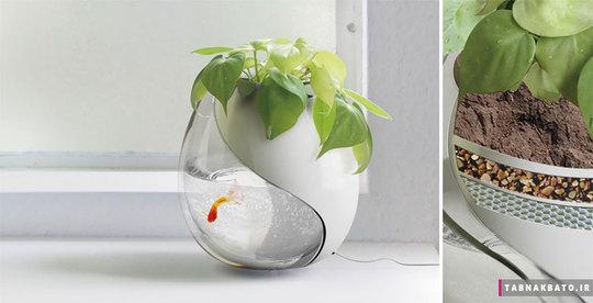 یک گلدان، دو زندگی متفاوت