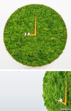 جلبک های ساعتی