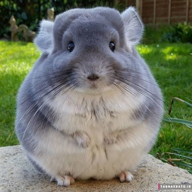 حیوان عجیبی که گران ترین پوست دنیا را دارد