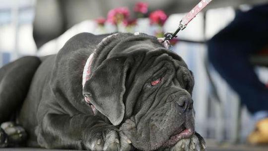 مارتا زشت ترین سگ جشنواره نیویورک2017