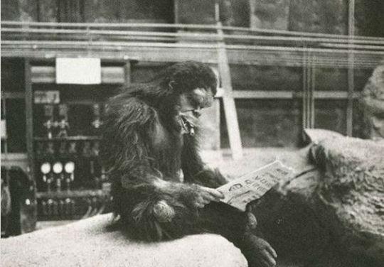میمونی روزنامهخوان در فیلم سینمایی ۲۰۰۱: ادیسه فضایی